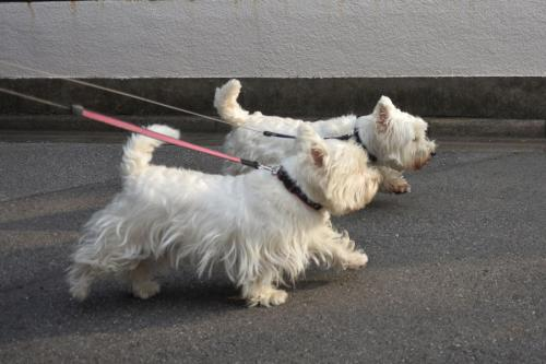 synchronizedwalking1.jpg