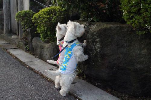 yakutatazunomirrorless1.jpg