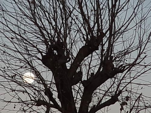 枯れ木と月