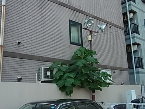 近所のど根性