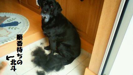 ビビの抜け毛