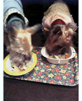 ワンコ達の夕食