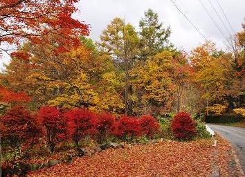 2011年10月23日_DSC_0652-0.jpg