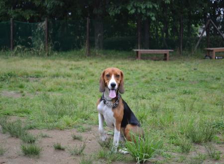 20110607青葉の森公園ドッグラン5