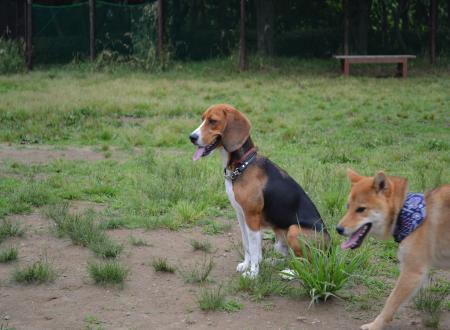20110607青葉の森公園ドッグラン4