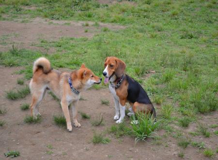 20110607青葉の森公園ドッグラン3
