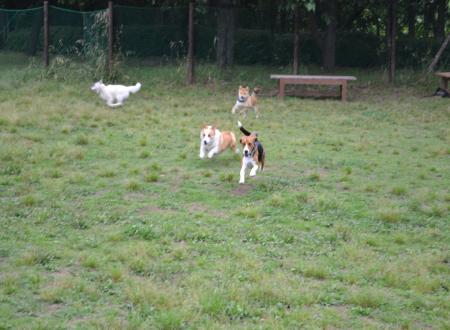 20110607青葉の森公園ドッグラン2
