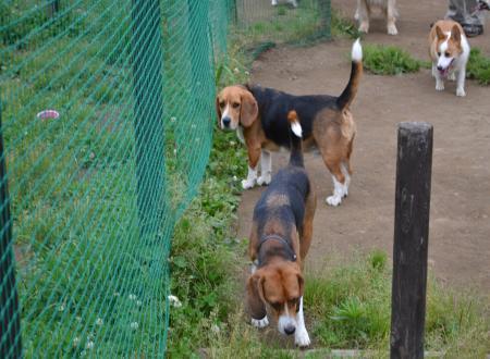 20110607青葉の森公園ドッグラン7
