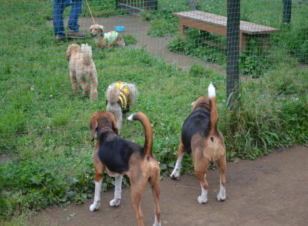 20110607青葉の森公園ドッグラン6