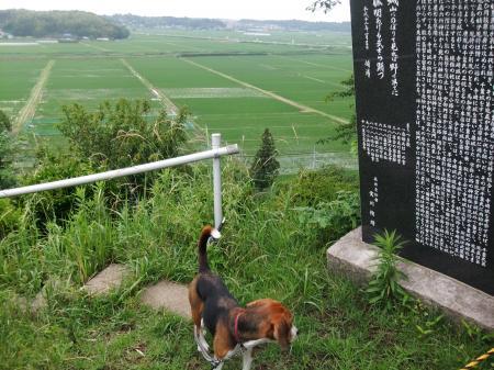 20110613散歩6