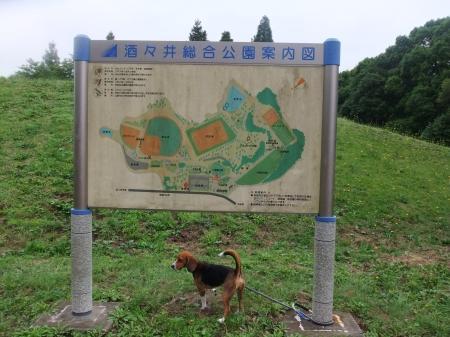 20110614酒々井総合公園1