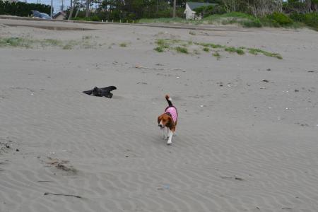 20110623片貝海岸2