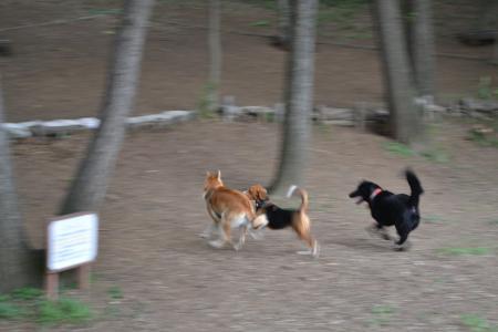 20110718内裏公園9