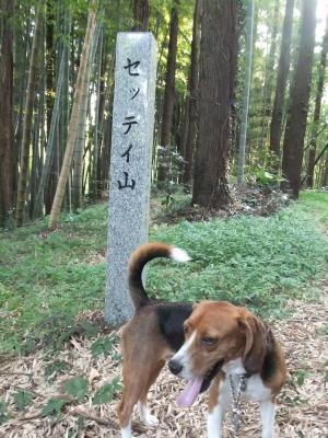 20110811本佐倉城跡5