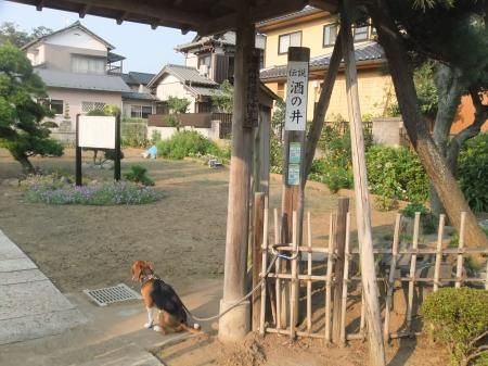 20110811本佐倉城跡14
