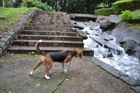 20110827一本杉公園3