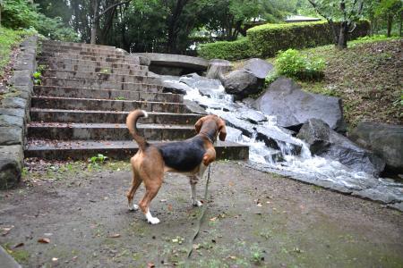 20110827一本杉公園2