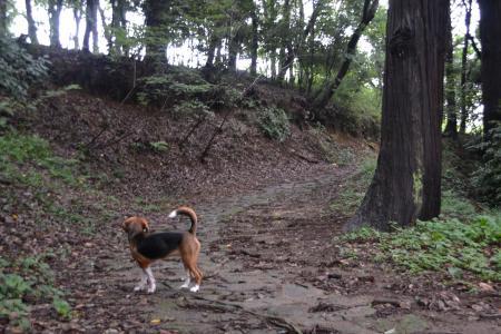 20110827一本杉公園9