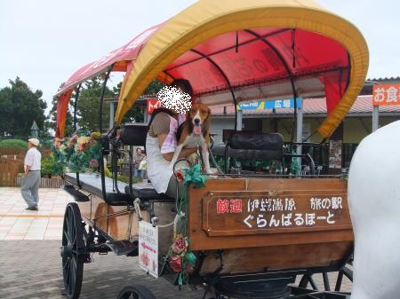2011伊豆旅行17