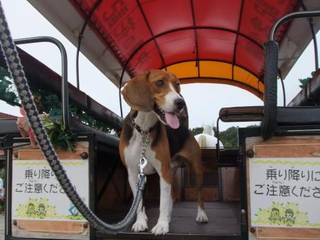 2011伊豆旅行18