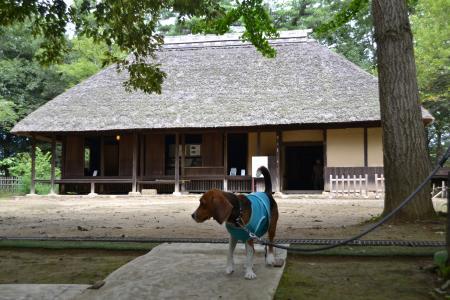 20110906坂田ヶ池15