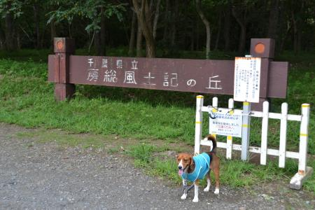 20110906坂田ヶ池13