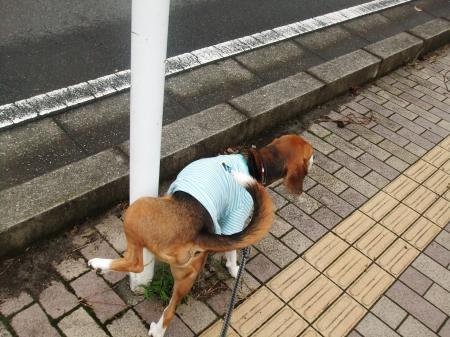 20111016朝散歩03