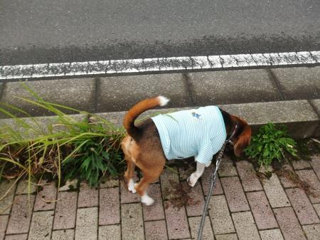 20111016朝散歩02