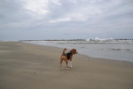20111019片貝海岸04