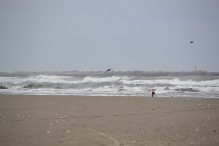 20111019片貝海岸01