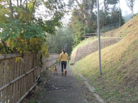 20111113朝散歩06