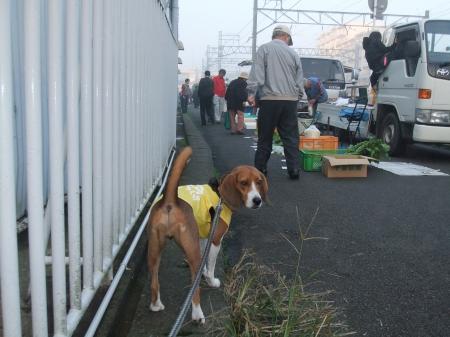 20111113朝散歩05