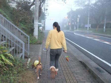 20111113朝散歩