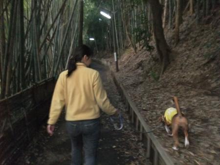 20111113朝散歩07