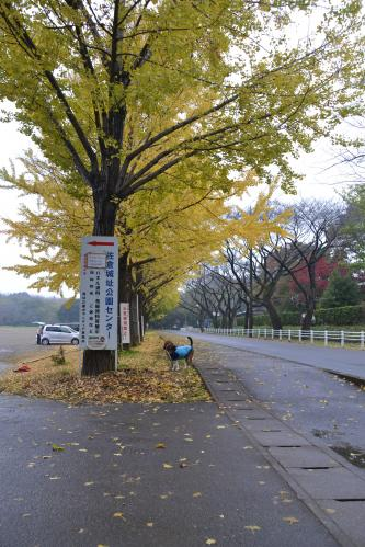 20111118佐倉城址公園02
