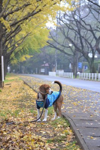 20111118佐倉城址公園03