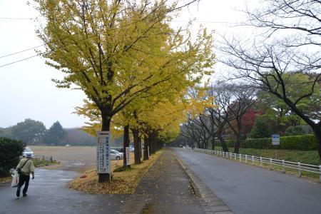 20111118佐倉城址公園01