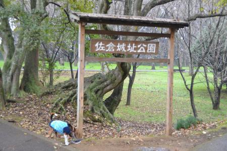 20111118佐倉城址公園08
