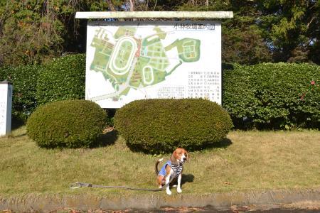 20111123小林牧場03