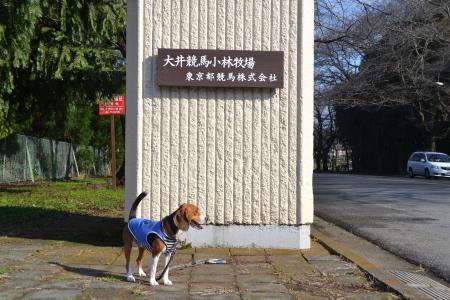 20111123小林牧場01