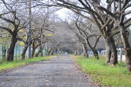 20111123小林牧場11