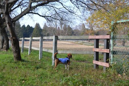 20111123小林牧場10