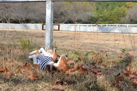 20111123小林牧場08