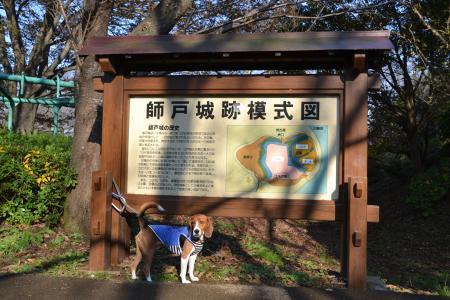20111123印旛沼公園06