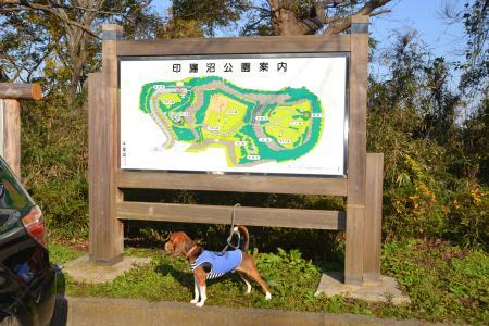 20111123印旛沼公園03