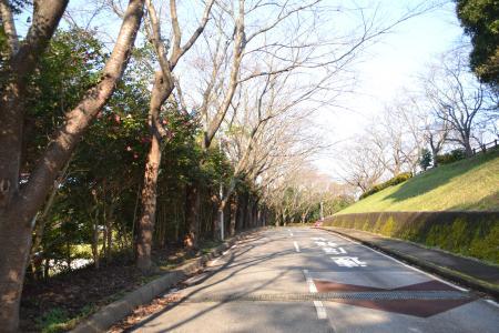 20111123印旛沼公園02
