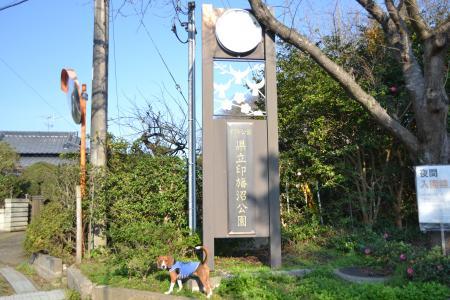 20111123印旛沼公園01
