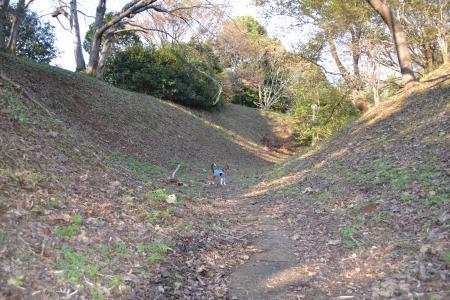 20111123印旛沼公園11