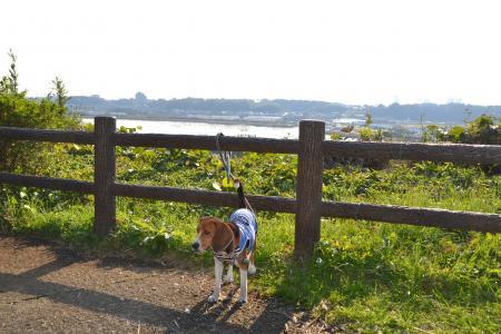 20111123印旛沼公園09