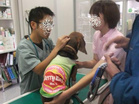 20111127今井動物病院02